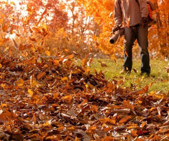 leaf removal Niles, Michigan